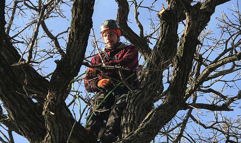 Tree Photo Gallery | Minneapolis MN | Minnesota Tree Surgeons
