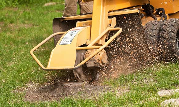 Stump Grinding Aside Image